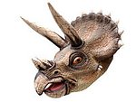 Triceratops Head Wall Mount Statue Life Size