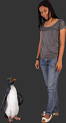 Rockhopper Penguin - 2FT Statue