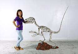 Dinosaur Skeleton Sculpture - Deinonychus