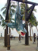 Huge Hanging Shark Statue 21 FT