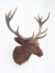 Reindeer Head Wall Mount Statue Life Size