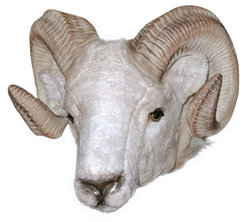 Ram Head Wall Mount Life Size Statue