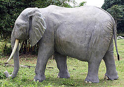 African Elephant Life Size Statue