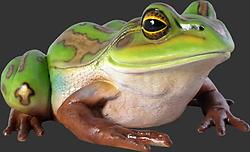 Giant Green and Golden Bell Frog