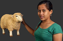 Merino Ewe - Small - Head up