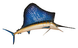 Sailfish Sculpture Hanging 11 FT Museum Quality
