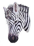 Zebra Head Wall Mount Life Size Statue