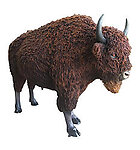 Buffalo Statue Life Size with Fur Museum Quality