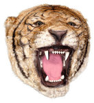 Tiger Head Wall Mount Life Size Statue