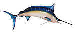Blue Marlin Sculpture Hanging 11 FT Museum Quality