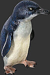 Fairy Penguin - 1FT Statue